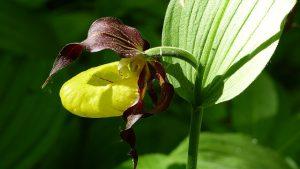 胡蝶蘭の葉が黄色くなってしまった原因ってなに?対処法は?